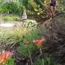 garden spring1